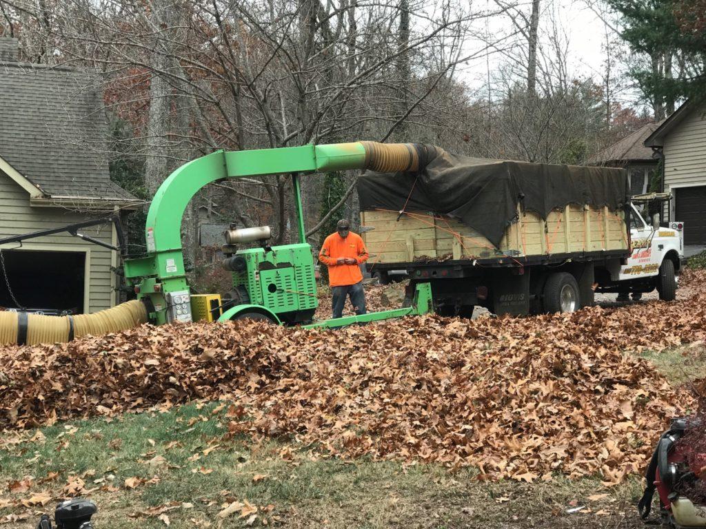 Asheville Leaf Removal